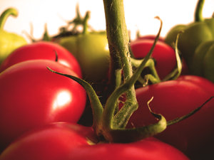 red_red_tomatos_by_minnosh1