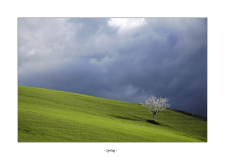 spring_by_frescendine