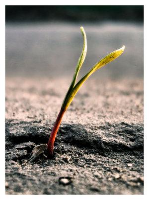 sprout_ii_by_deadedwin