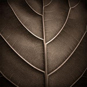 A_Leaf_by_HolgaVision